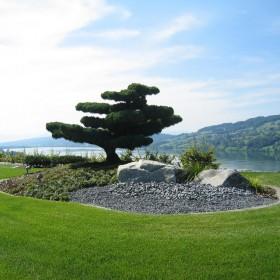 bonsai<span></span>